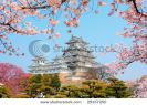 himeji-castle-surrounded-by-cherry-blossom-29157250-thumbnail