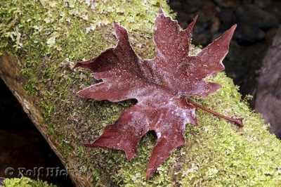 fall_leaf_picture_t1123-content