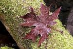 fall-leaf-picture-t1123-content