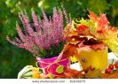 pot-of-pink-heather-flowers-and-colorful-leaves-in-autumn-garden-thumbnail