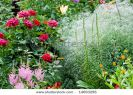 nature-garden-with-flowers-rose-lily-ets-14693296-thumbnail