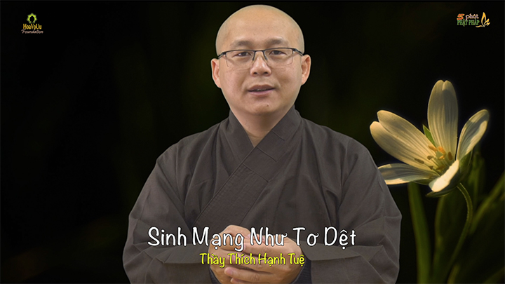 Thich Hanh Tue 504 Sinh Mang Nhu To Det