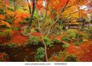 japanese-maple-during-fall-in-kyoto-japan-thumbnail