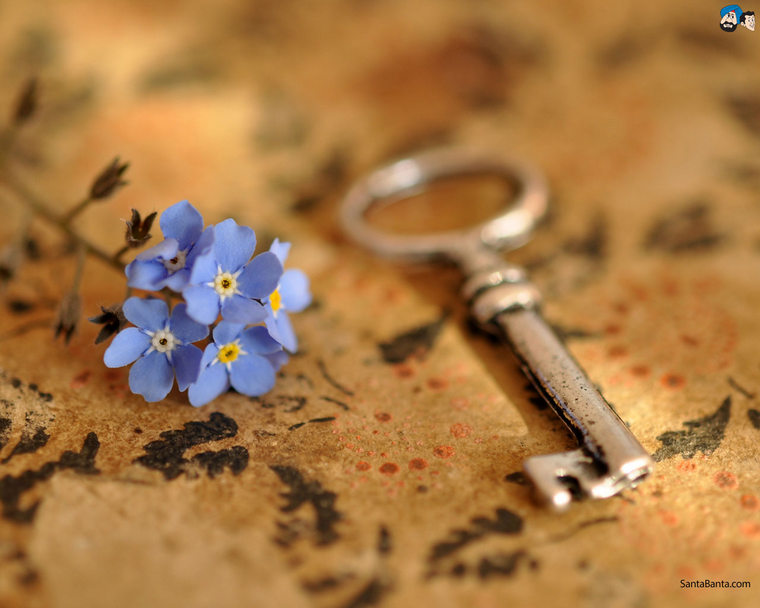 forget-me-not-12a